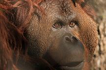Cameron-Park-Zoo